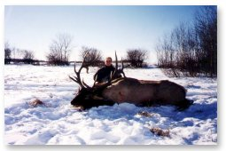 Brandon (13 years) worked hard to get close enough to this magnificent bull for a sure shot.